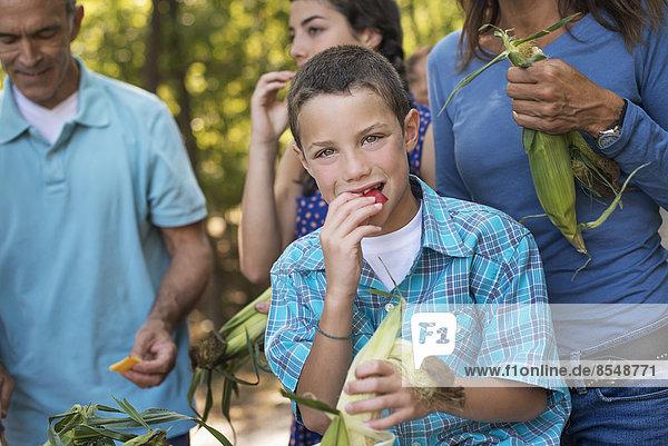 Eine Gruppe junger Menschen isst rohes frisches Gemüse  Maiskolben  direkt nach der Ernte.