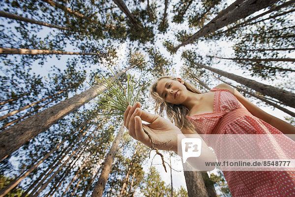 Eine junge Frau im Wald  die einen kleinen Kiefernzweig zur Pflanzung hält.