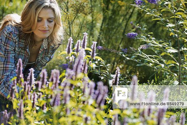 Frau  die in einer Bio-Blumengärtnerei ein Feld mit Bio-Blumen pflegt.