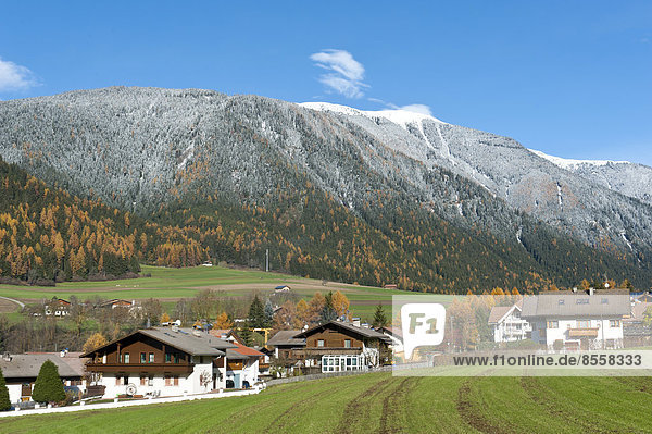 Berg bedecken über Wald Dorf Herbst Ansicht Trentino Südtirol Italien Schnee Trentino-Südtirol