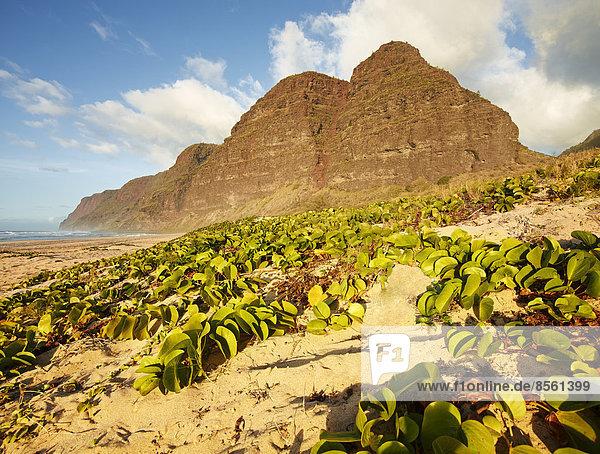 Sandstrand an der Napali Coast  Polihale State Park  Kaua'i  Hawaii  USA