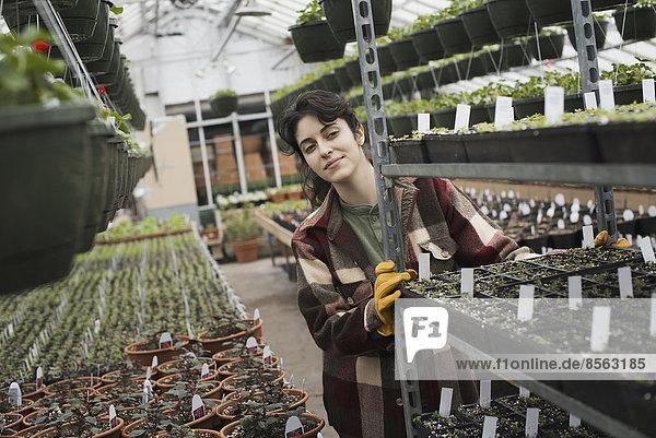 Frühlingswachstum in einem Gewächshaus einer biologischen Baumschule. Eine Frau schiebt einen Wagen mit Saatgutbehältern mit Etiketten.
