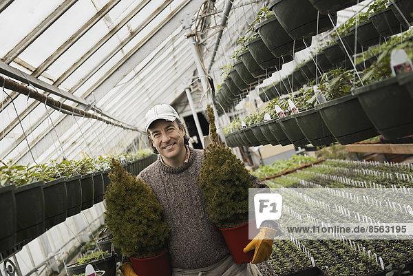 Frühlingswachstum in einem Gewächshaus einer biologischen Baumschule. Ein Mann hält zwei junge Koniferensträucher in Töpfen.