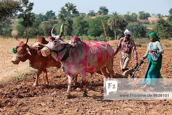 Indien  Madhya Pradesh