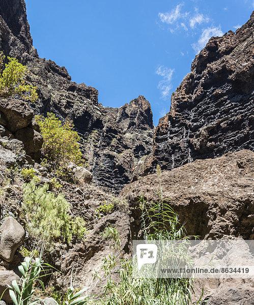 Klippe in der Masca-Schlucht  Felsenformation  Vulkangestein  Teneriffa  Kanarische Inseln  Spanien