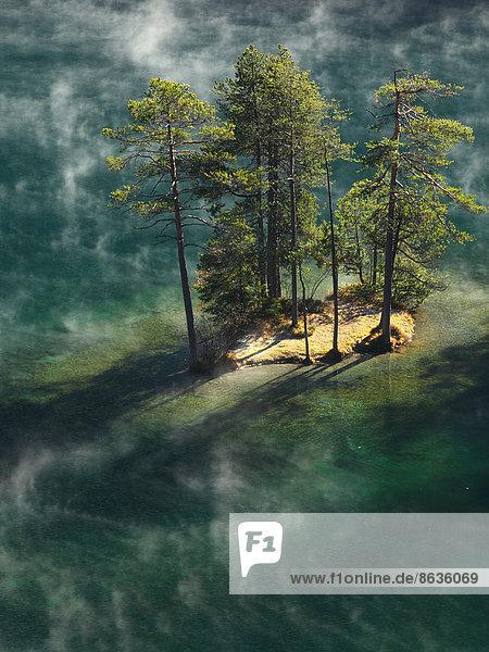Bäume im Morgennebel auf kleiner Insel im Fernsteinsee  Nassereith  Tiroler Oberland  Tirol  Österreich