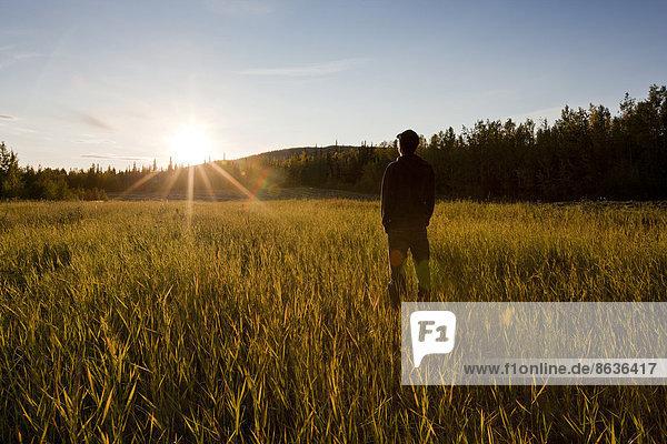 Mann steht in einem Feld bei Sonnenuntergang  Fairbanks  Alaska  USA
