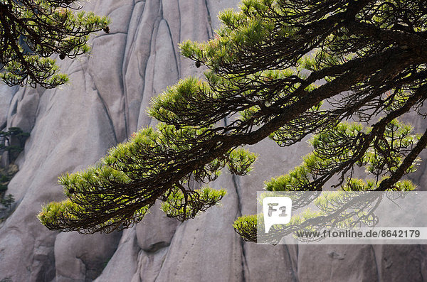 Huang-Shan-Landschaft  China