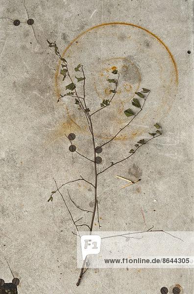 Nahaufnahme des trockenen Zweiges auf einer rostigen Oberfläche
