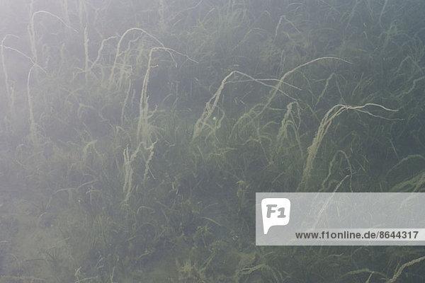 Grünes Gras auf der Wiese