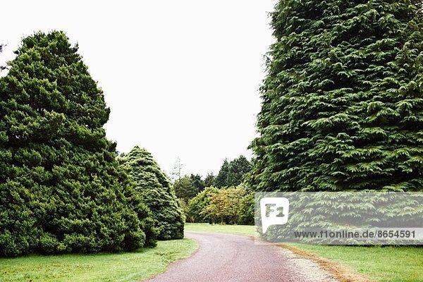 Einfahrt und Tannenbäume