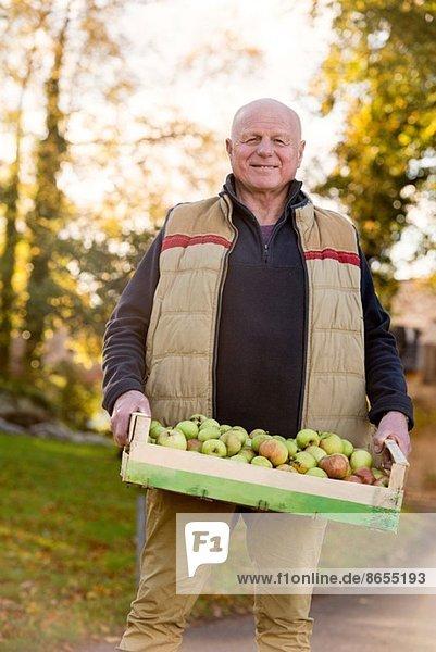 Senior Mann mit Apfelkiste