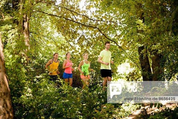 Gruppe von Läufern  die im Wald laufen