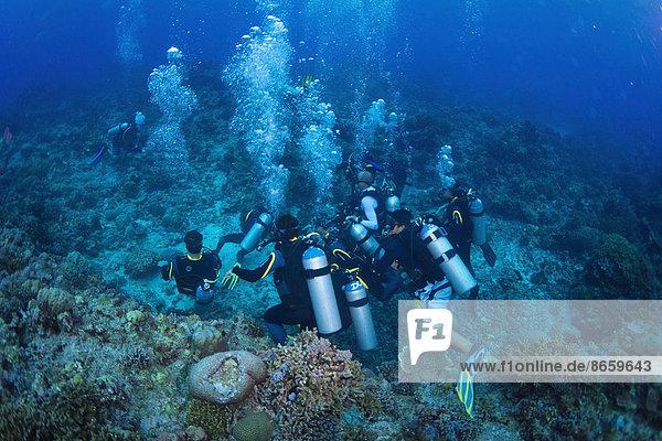 Tauchergruppe auf dem Grund im Korallenriff  Philippinen