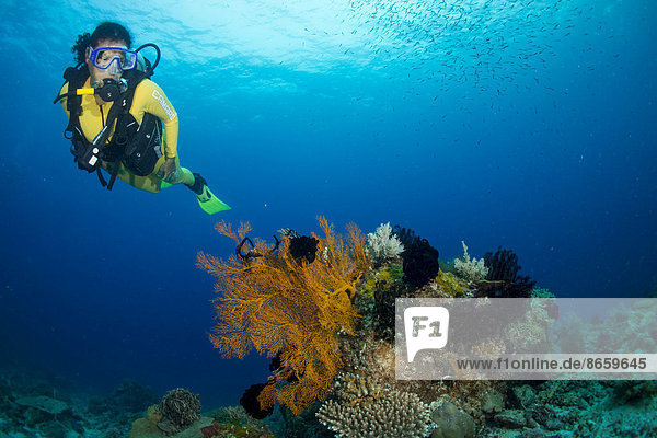 Scuba diver diving in a coral reef observing a gorgonian  Philippines