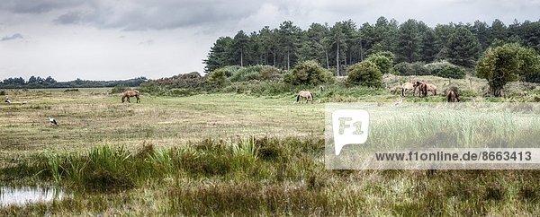 Naturpark in der Normandie  Frankreich