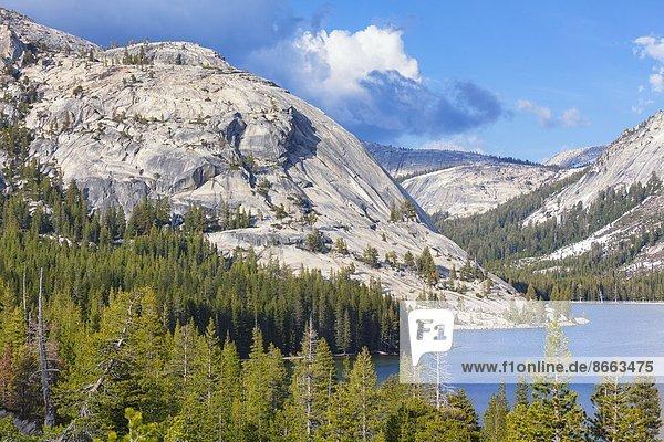 Tenaya Lake  Yosemite Nationalpark  Kalifornien  USA