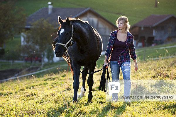Junge Frau geht mit Hannoveraner  Rappe  auf Wiese  Nordtirol  Österreich