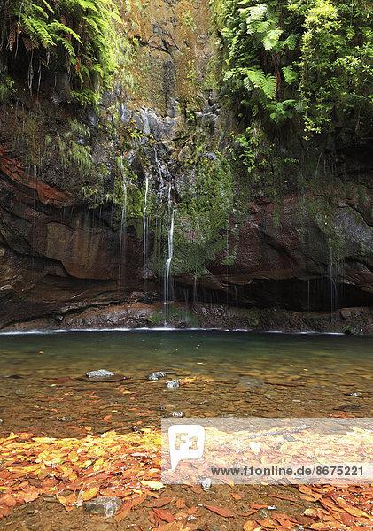 Quellen von Rabacal  Madeira  Portugal