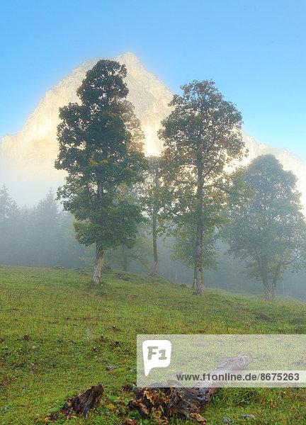 Bäume im Morgennebel im Ahornboden  Hinterriß  Tirol  Österreich