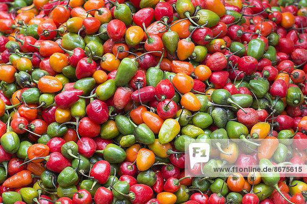 Rote  gelbe und grüne Chilischoten
