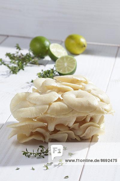Goldene Austernpilze (Pleurotus citrinopileatus)  Limetten und Zitronenthymian auf Holztisch
