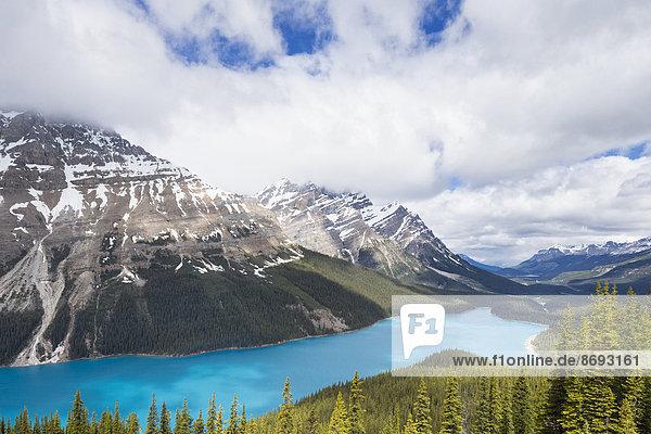 Kanada  Alberta  Banff National Park  Peyto Lake von Bow Summit aus gesehen