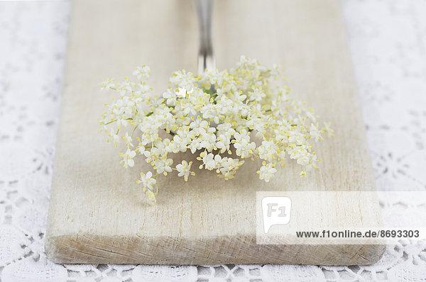 Weiße Holunderblüten (Sambucus nigra) auf Löffel und Holzbrett  Studioaufnahme
