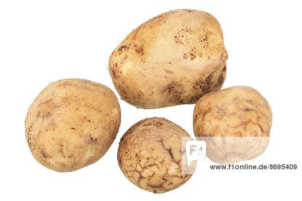 Kartoffelsorte Ackersegen
