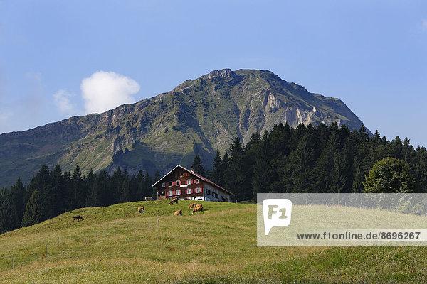 Kaualpe alp and Winterstaude mountain near Schetteregg  Egg  Bregenz Forest  Vorarlberg  Austria
