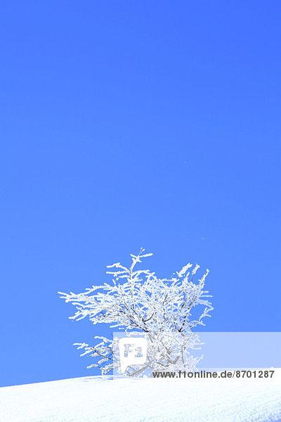 Rimed tree