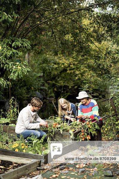 Three generation females gardening together in yard