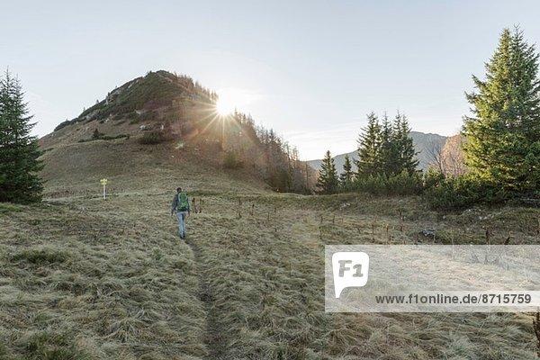 Mittelerwachsene Frau beim Wandern in Achensee  Tirol  Österreich