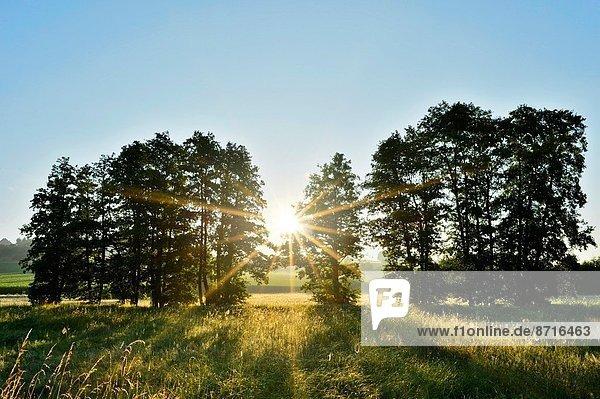 Morgen  Landschaft  Natur  früh  Deutschland