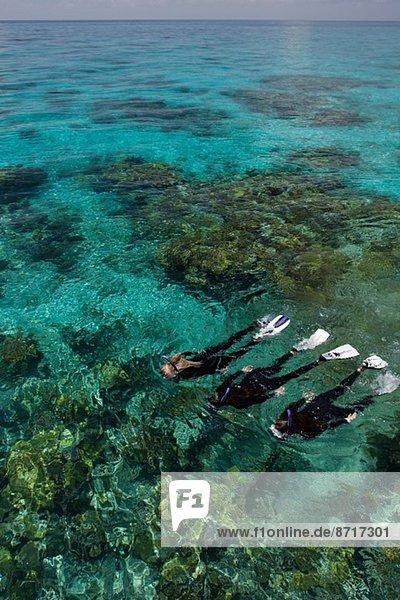 Schnorchler an....einem Korallenriff.