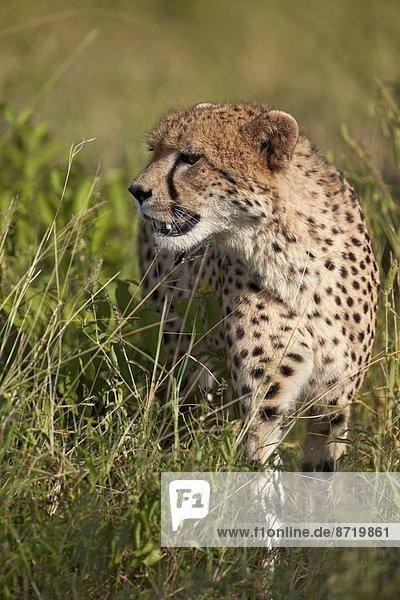 Südliches Afrika  Südafrika  Kruger Nationalpark  Afrika