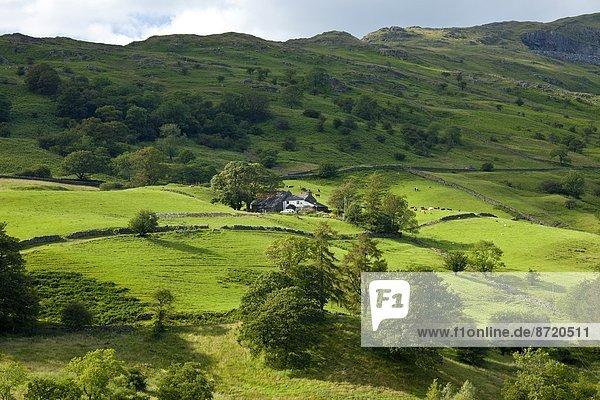 nahe  Großbritannien  Hügel  Bauernhof  Hof  Höfe  See  ambleside  Cumbria  Ortsteil