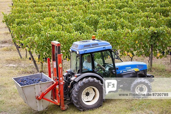 Wohngebäude Wein ernten Italien Montalcino Toskana