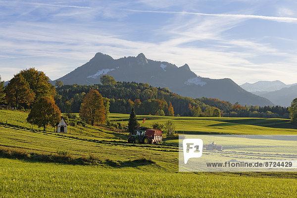 Samerberg bei Grainau  hinten Kitzstein  Heuberg und Wasserwand  Chiemgau  Oberbayern  Bayern  Deutschland