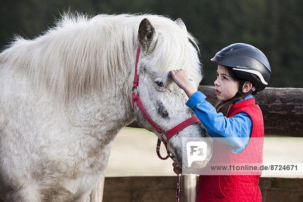 Girl combing a pony's mane  gray  Tyrol  Austria