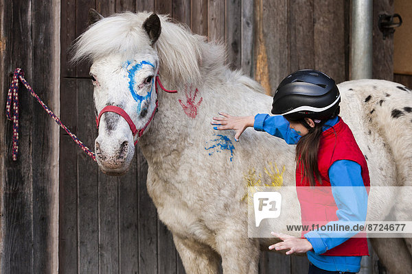 Girl wearing a riding helmet painting a pony with finger paints  gray  Tyrol  Austria
