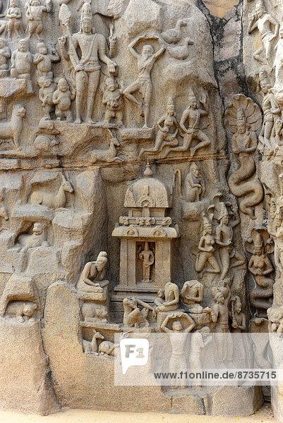 Herabkunft der Ganga  Flachrelief  Ausschnitt  Mamallapuram  Tamil Nadu  Indien