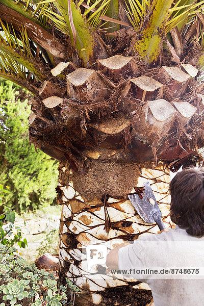 Mann  Baum  Palme  Rückansicht  Mallorca  abbröckeln  Spanien
