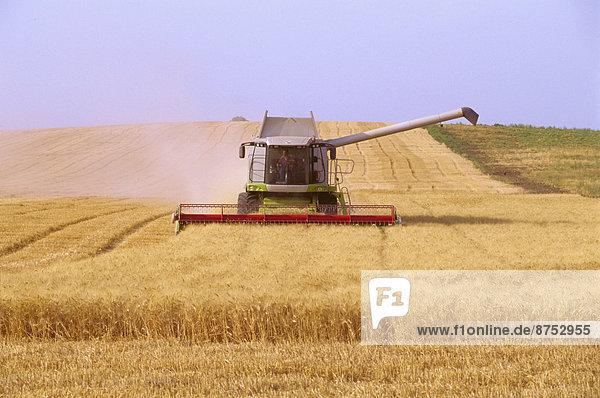 Mähdrescher Ernte Weizen im Feld