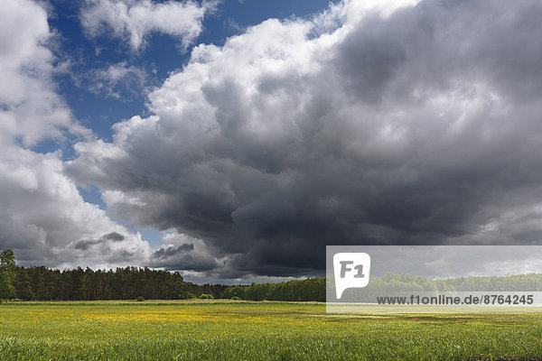 Cloudy sky above the shore meadows at the headwaters of the river Havel  Müritz National Park  at Babke  Mecklenburg-Western Pomerania  Germany