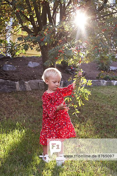 Girl picking rowanberries