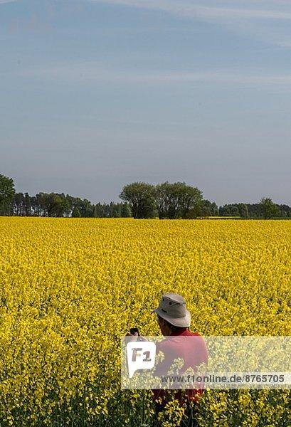 Mann  Fotografie  nehmen  Feld  Öland  Raps  Brassica napus  Schweden
