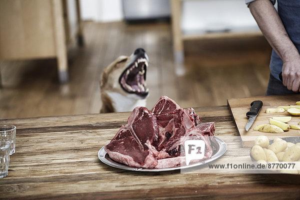 Mann in der Küche bei der Zubereitung von Kartoffeln und Steaks mit Hundebeobachtung