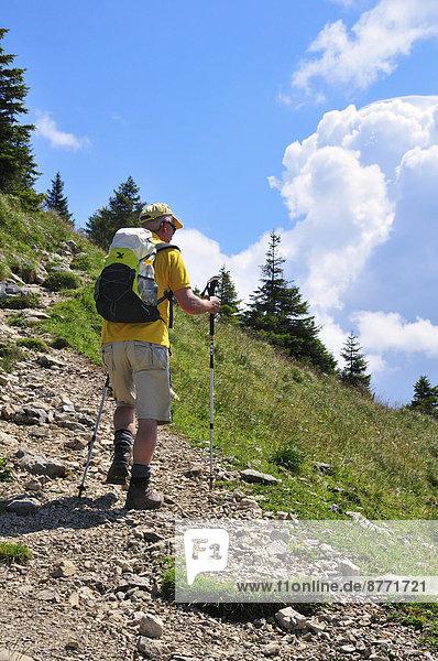 Wanderer mit Rucksack und Wanderstöcken  Brecherspitz  Schliersee  Oberbayern  Bayern  Deutschland