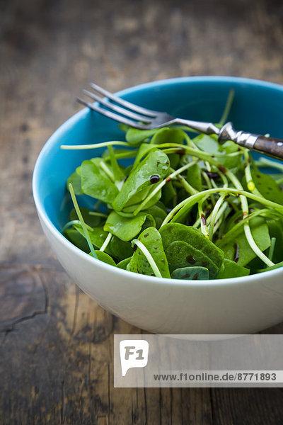 Schale mit winterlichem Portulak-Salat (Claytonia perfoliata) auf Holztisch